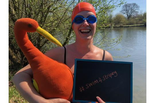 The Great Swim For Stripey